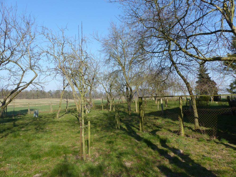 Obstbaumwiese